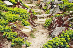 Pavestone Walkway Design in Garden Royalty Free Stock Images