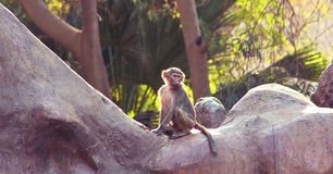 Pavian-Affe, der im Zoo kühlt Stockfotos