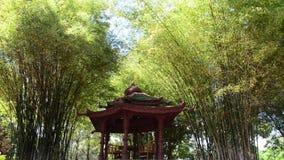 Pavilhão chinês com vento da árvore da natureza vídeos de arquivo