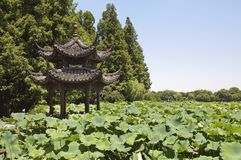 Pavilhão e lagoa de lótus, lago ocidental, Hangzhou Fotografia de Stock Royalty Free