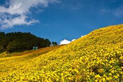 The pavilion in flower yellow field Royalty Free Stock Photos