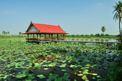 Pavilion in a lotus farm Royalty Free Stock Image