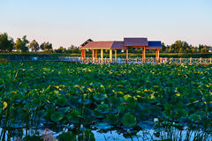 The pavilion and lotus sunset Royalty Free Stock Image
