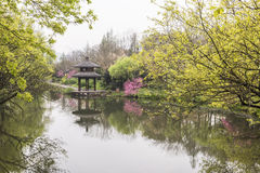 Pavilion and peach blossom royalty free stock images