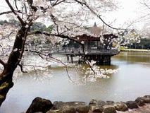 Pavilion in the pond. With Sakura view Stock Photos
