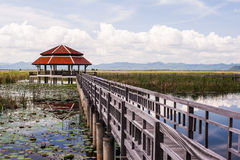 Pavilion and wood bridge in swamp Royalty Free Stock Image