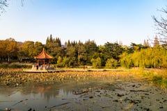 Paviljongen i en Lotus Pond i Zhongshan parkerar, hösten, Qingdao Royaltyfria Foton