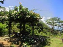 Pavillion avec des fleurs sur les Seychelles image stock