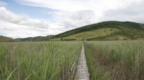 Pavillion distante e ponte de madeira através da reserva natural de lingüeta de sic foto de stock