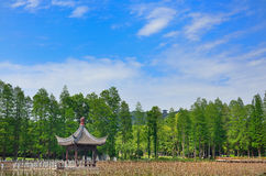 Pavillion ,lotus ,blue sky ,tree Stock Photos