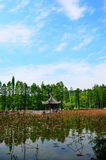 Pavillion ,lotus ,blue sky ,tree Stock Images