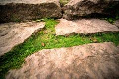 Pavimentação antiga da pedra calcária e grama fresca, fim imagens de stock royalty free