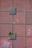 Pavimentación del fondo del cuento Imagen de archivo libre de regalías