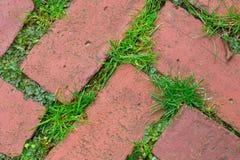 Pavimentadoras del ladrillo Foto de archivo
