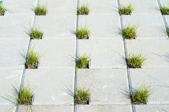 Pavimentando pedras concretas com furos para a grama Fotos de Stock Royalty Free
