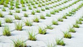 Pavimentando pedras concretas com furos para a grama Imagens de Stock