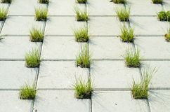 Pavimentando pedras concretas com furos para a grama Imagens de Stock Royalty Free