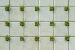 Pavimentando a textura concreta das pedras Fotos de Stock