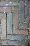 Pavimentazione Fotografia Stock Libera da Diritti