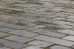 Pavimentazione bagnata Fotografia Stock