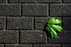 Pavimentazione con il foglio verde immagine stock