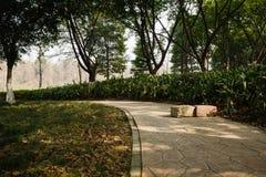 Pavimentazione curva ombreggiata il giorno soleggiato Fotografia Stock