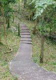 Pavimentazione del marciapiede della foresta Immagine Stock