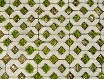 Pavimentazione dell'erba Fotografia Stock