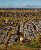 Pavimentazione di Innishmore Landscape_Limestone Immagine Stock