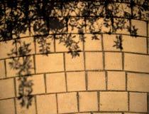 Pavimentazione ed ombre dai cespugli Fotografia Stock