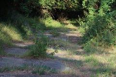 Pavimentazione invasa con le erbacce Immagini Stock