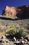 Pavimento arido di grande canyon Immagini Stock