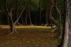 Pavimento astratto della giungla che ha foglie cadute e che mostra profondità in natura con i tronchi di albero fotografia stock libera da diritti
