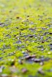 Pavimento com musgo verde-claro Imagens de Stock