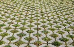 Pavimento da grama Fotos de Stock Royalty Free
