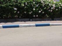 Pavimento de camino y frontera azul y blanca Imagenes de archivo