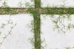 Pavimento de la calzada de la piedra y de la grava en jardín imagen de archivo libre de regalías