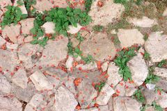 Pavimento de pedra antigo com grama e as plantas brotadas fotografia de stock royalty free