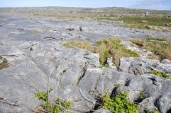 Pavimento de pedra calcária Imagem de Stock Royalty Free