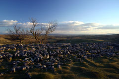 Pavimento de pedra calcária Foto de Stock Royalty Free