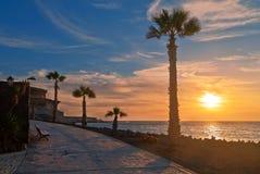 Pavimento de pedra com as palmas ao longo do mar no por do sol Imagens de Stock Royalty Free