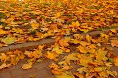 Pavimento de pedra nas folhas de outono douradas Imagens de Stock Royalty Free