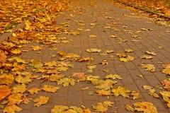 Pavimento de pedra nas folhas de outono douradas Fotos de Stock Royalty Free