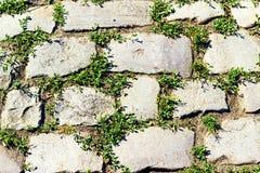 Pavimento de piedra con la hierba Imagen de archivo libre de regalías