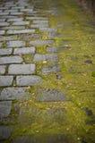 Pavimento de piedra mojado con el musgo Fotos de archivo