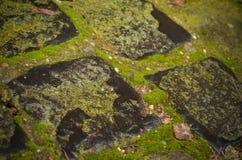 Pavimento de piedra mojado con el musgo Imagen de archivo libre de regalías