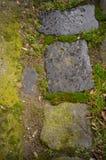 Pavimento de piedra mojado con el musgo Fotografía de archivo libre de regalías