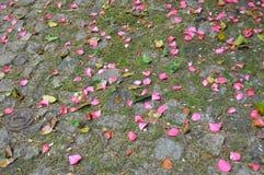 Pavimento dei petali Fotografie Stock Libere da Diritti