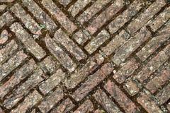 Pavimento del ladrillo Fotos de archivo libres de regalías