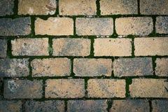 Pavimento del ladrillo con el musgo fotografía de archivo